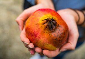 Easy Follow Mediterranean Diet - pomegranate