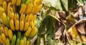 Calories in Banana - social
